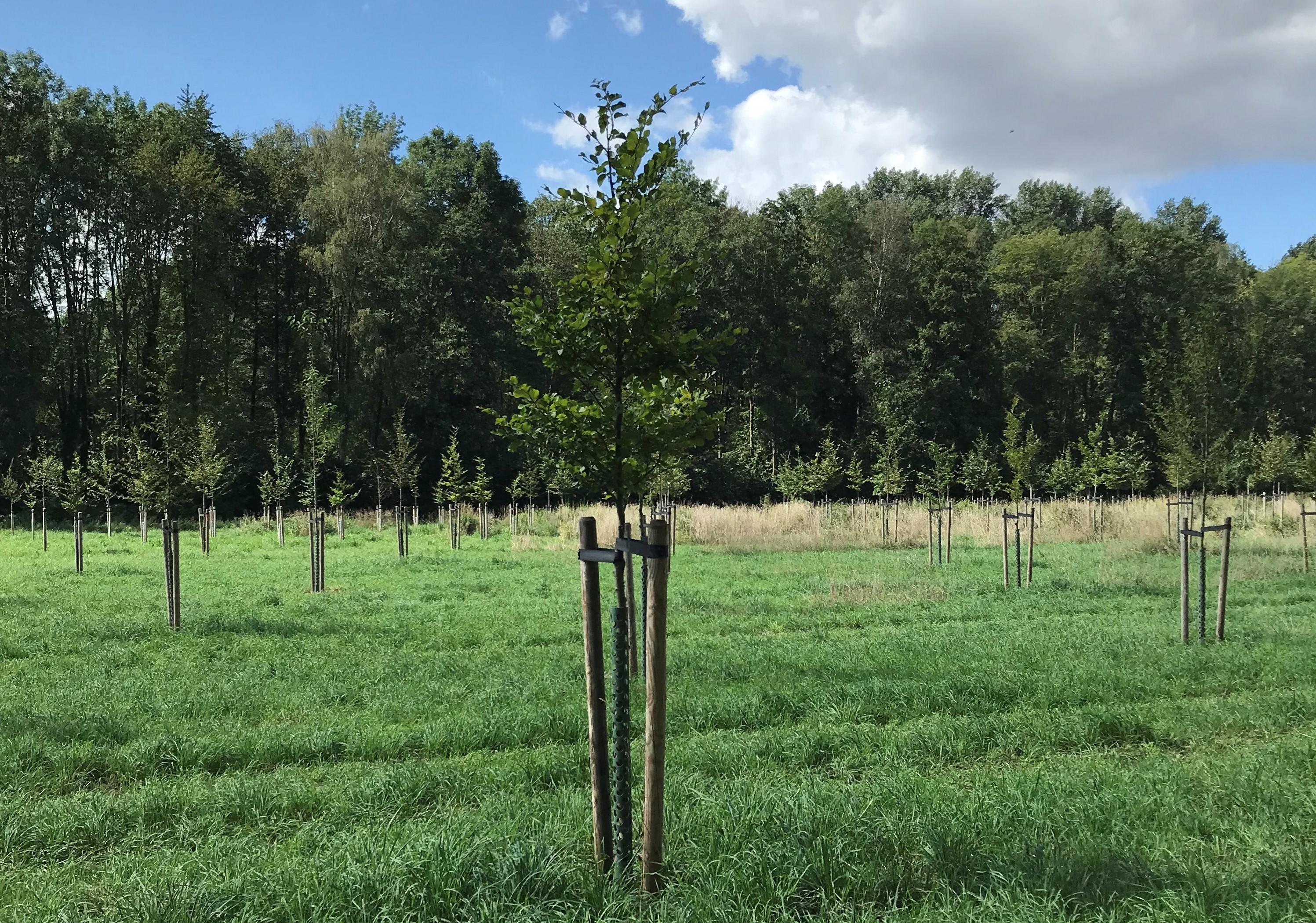 Einen Baum pflanzen im Bürgerwäldchen in Meerbusch-Büderich